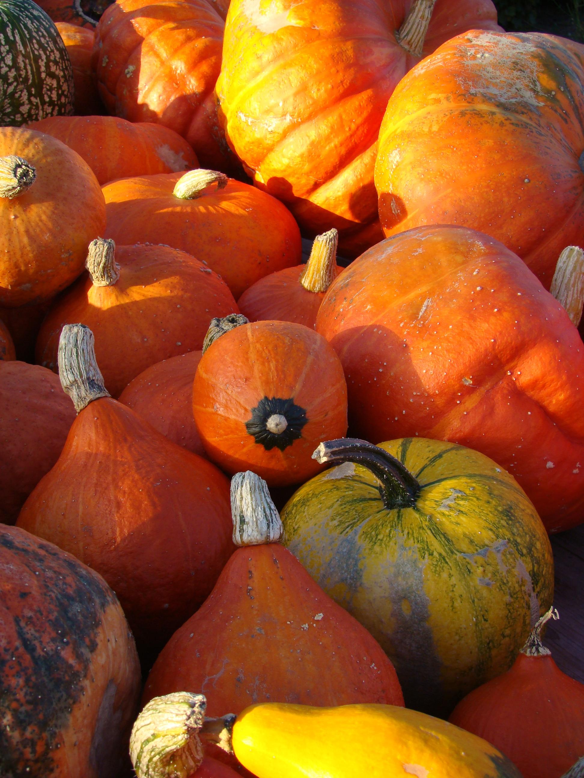 txpinky pumpkins orange fruit bright Halloween images