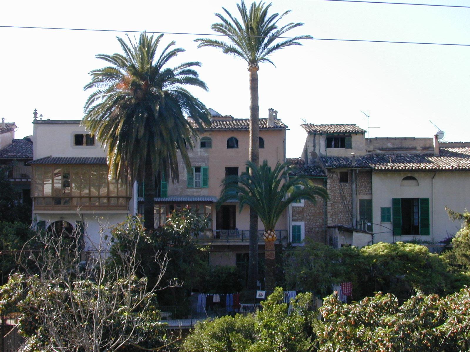 palm palmtree palmtrees tropical spanish mexican village mediterrenean