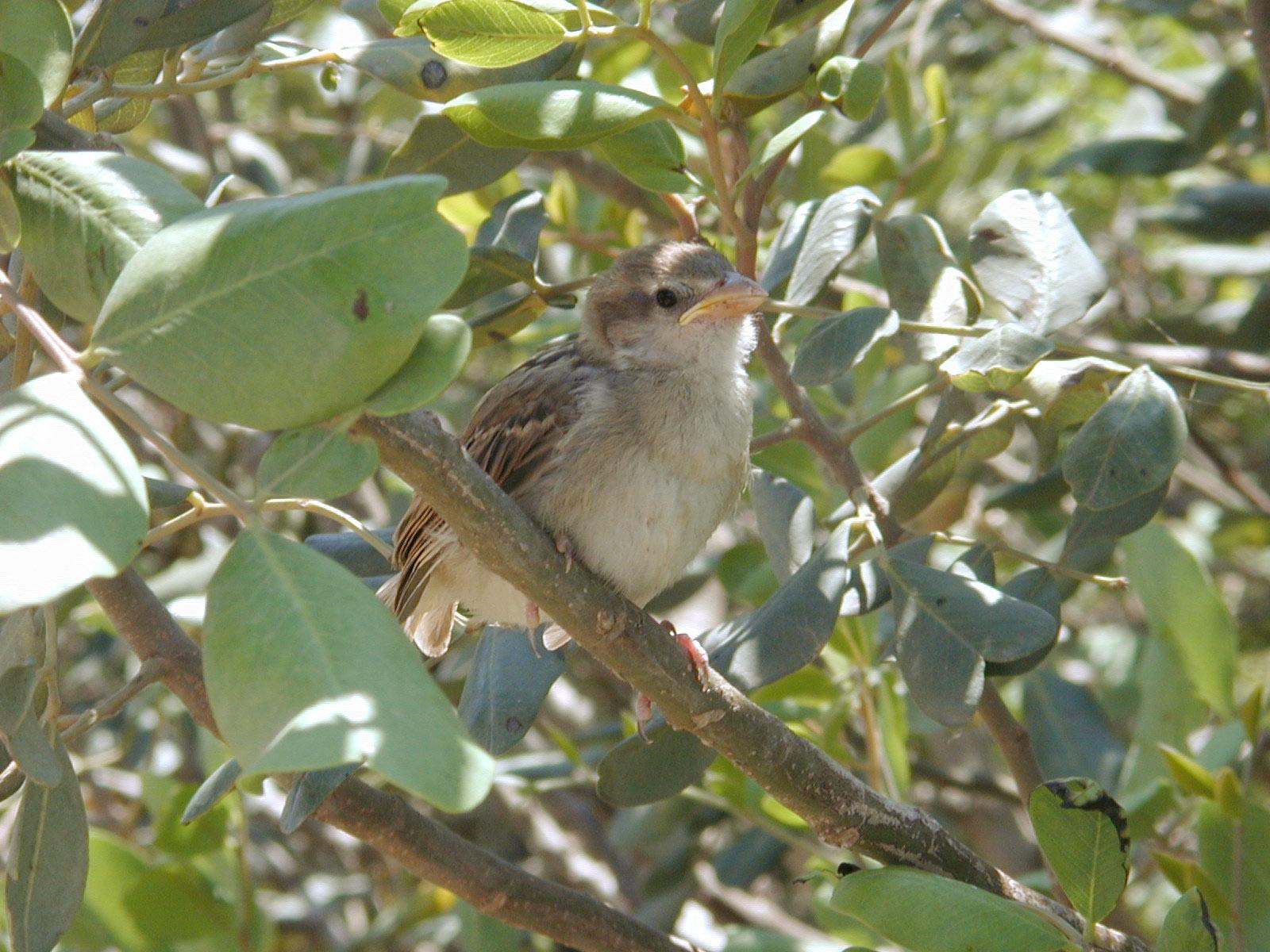 bird tree feathers soft closeup