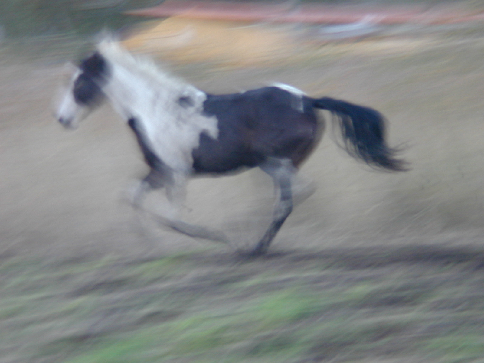 horse gallop gallopping speed apache pony rodeo sand kick kicking up