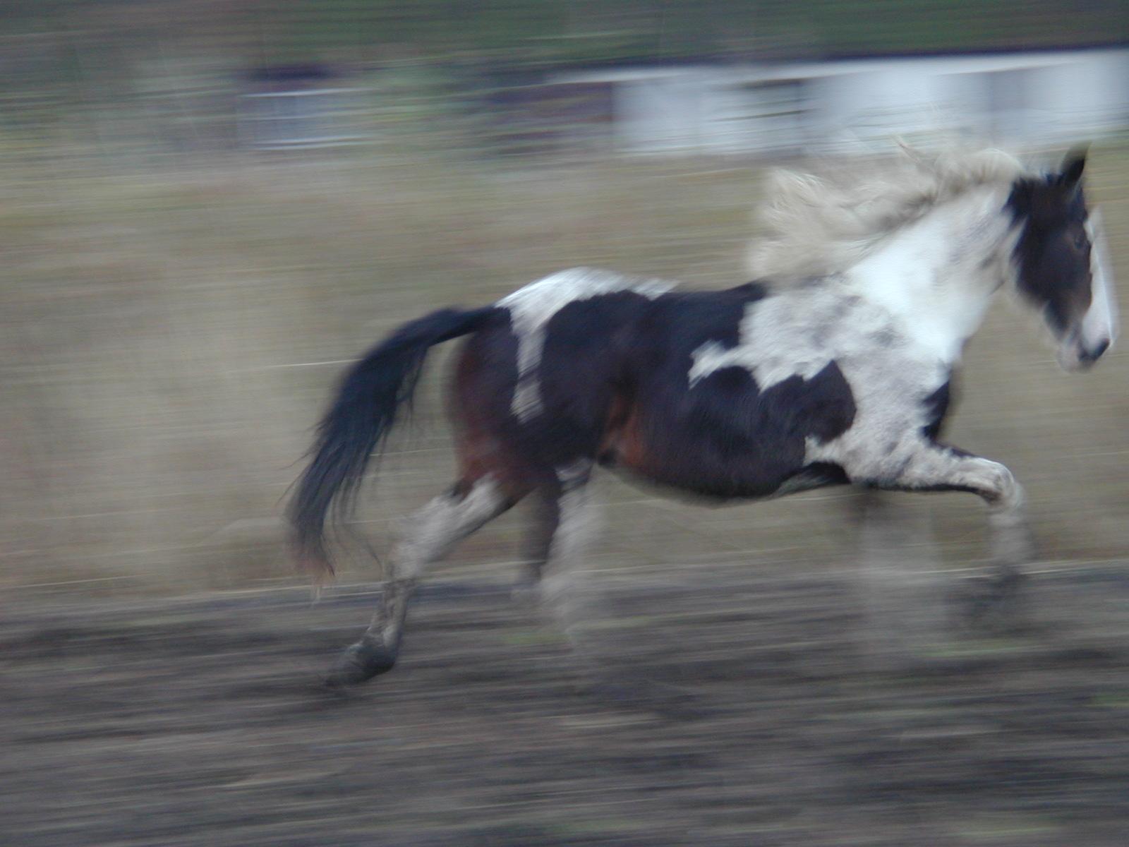 nature animals land horse blur blurs speed running gallopping