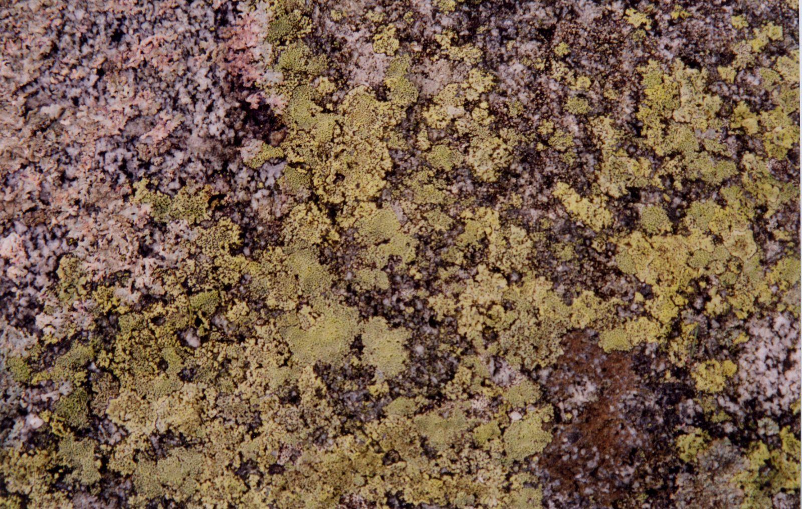 moss fungus nature plants texture walls royalty-free