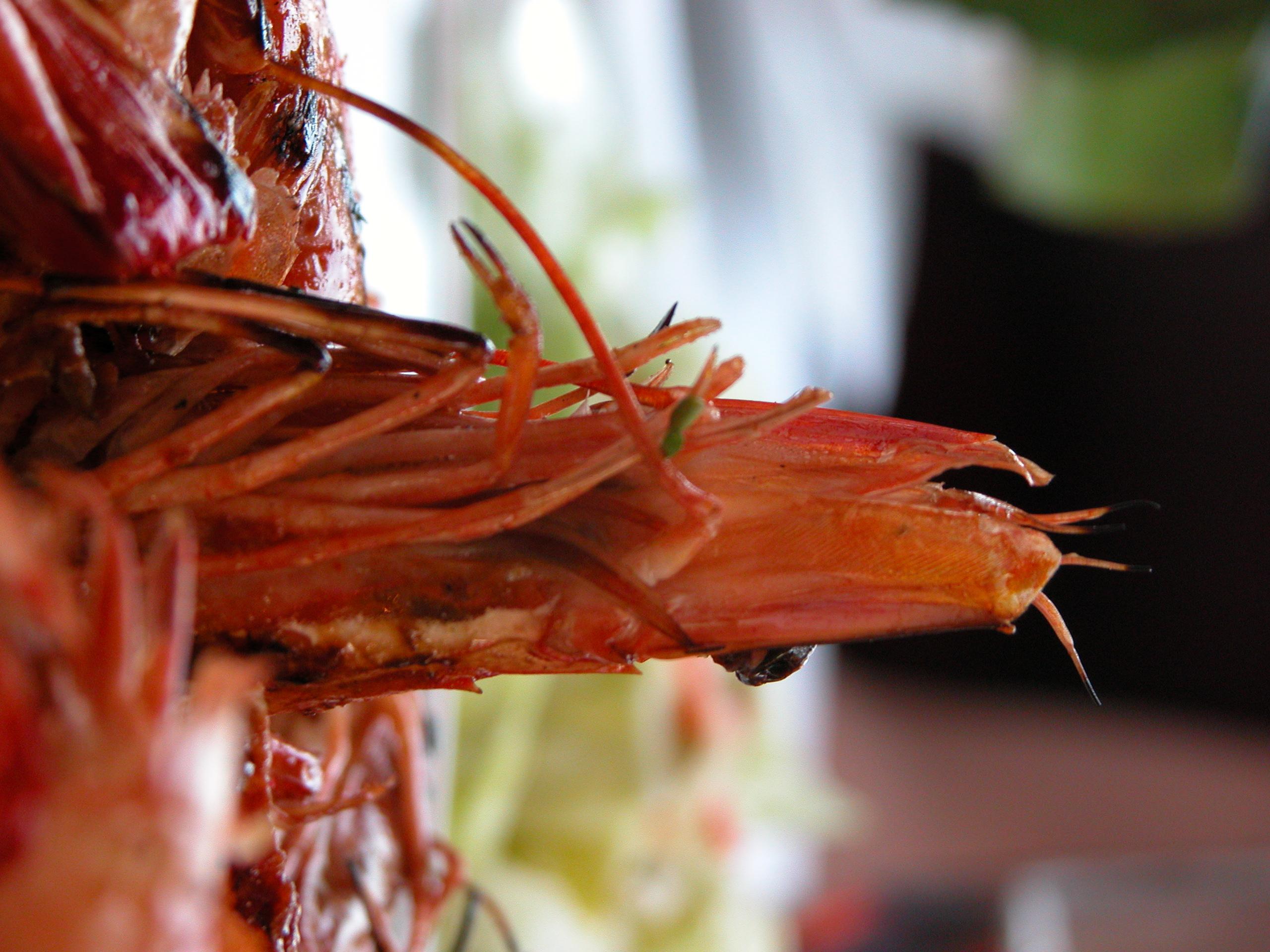 pueraria thomsonii root