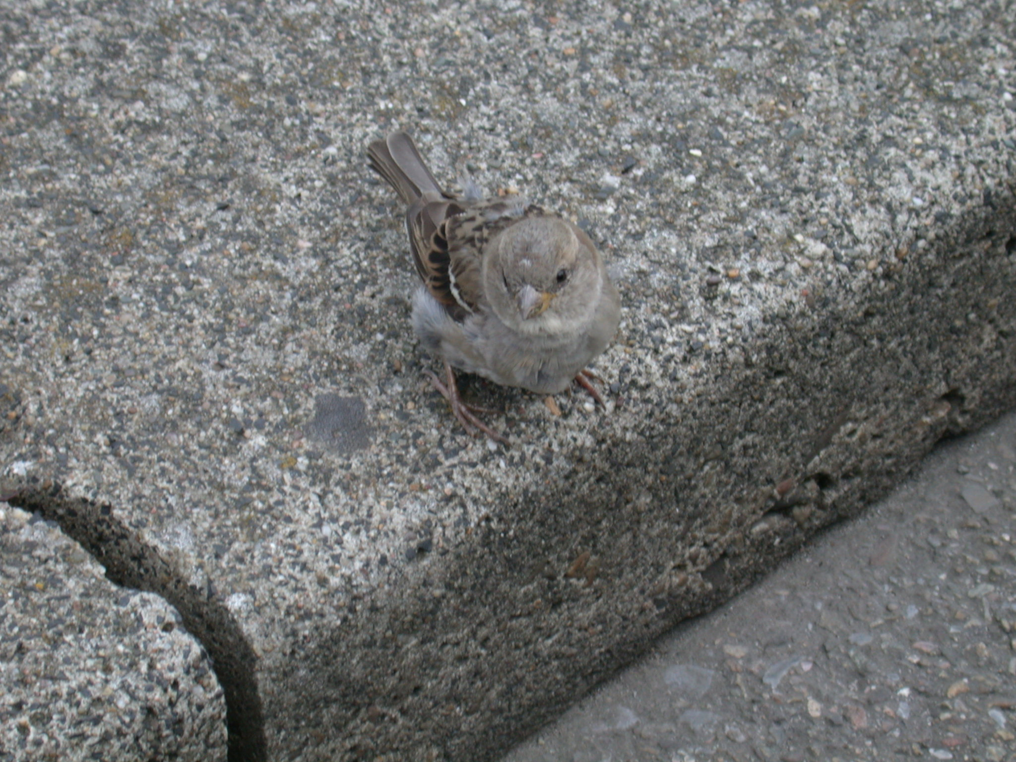 grey bird on sidewalk street