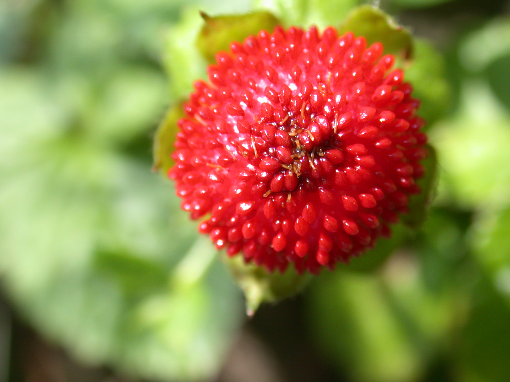 image.php?image=b6nature_plants001.jpg&dl=1