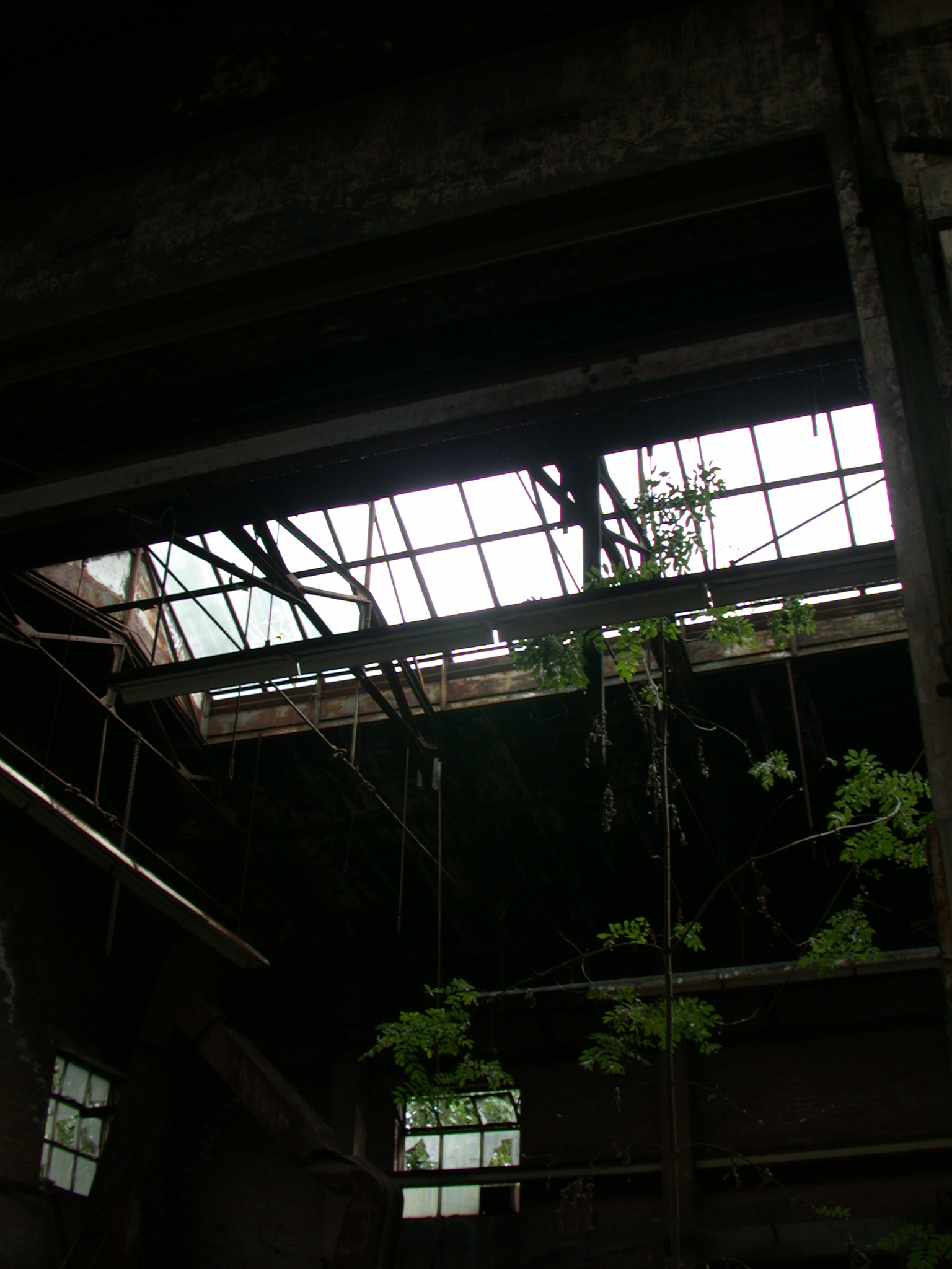 architecture interiors abandoned factory tree growing inside the building hall