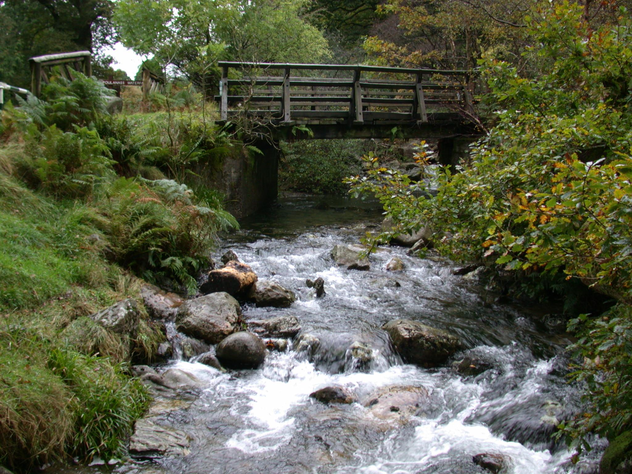 stream water river bridge forest trees