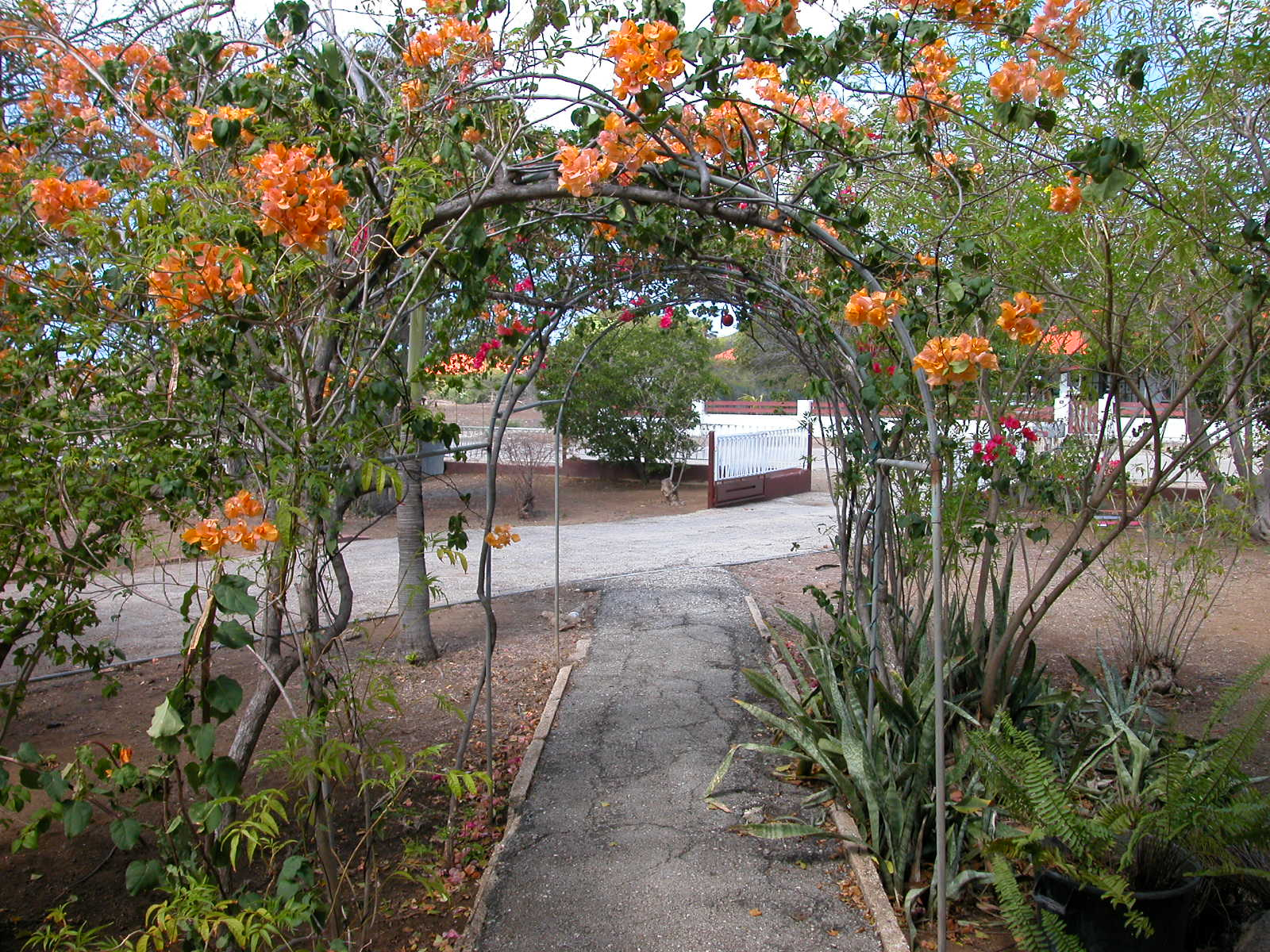 jacco path pathway arch flowers blooming park walking walk in the green autumn