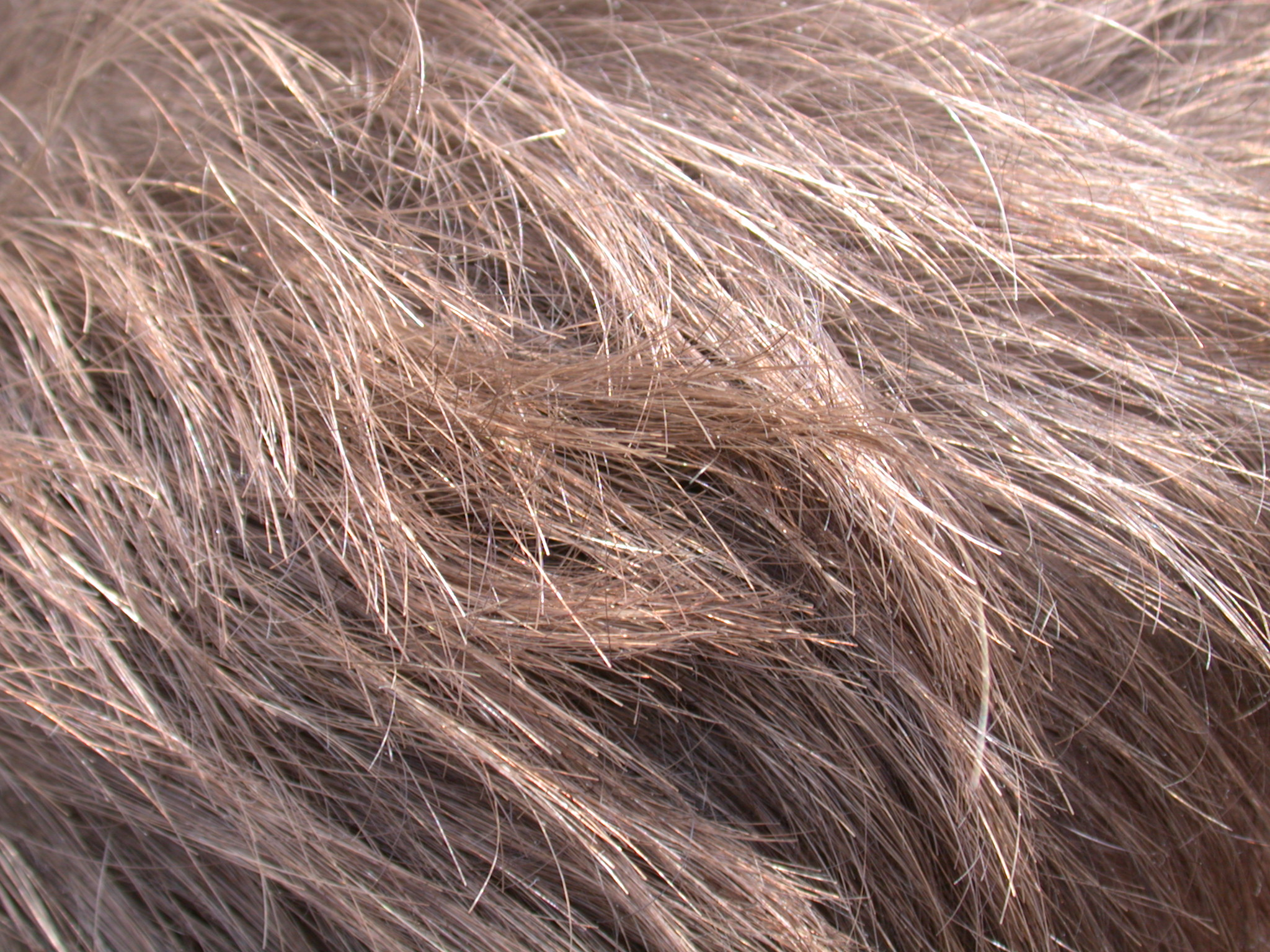 human brown hair textures free texture royalty-free